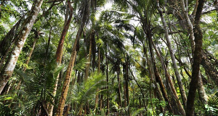 Puerto-Rico-Rainforest