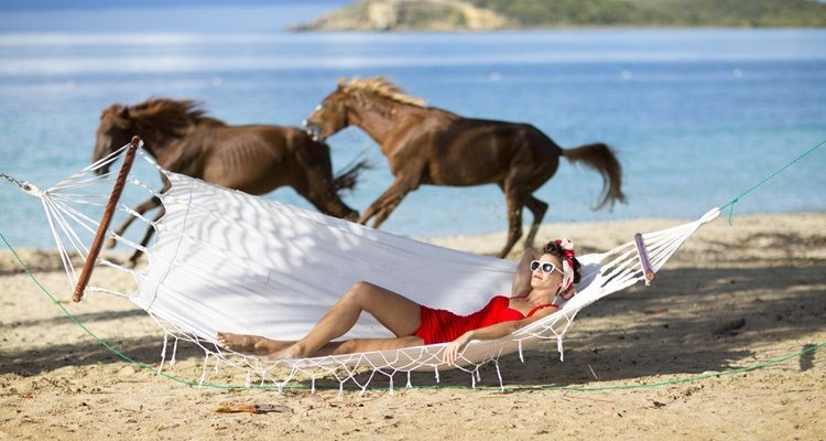 Vieques-horses-on-the-beach