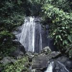 Water-Puerto-Rico-Rainforest