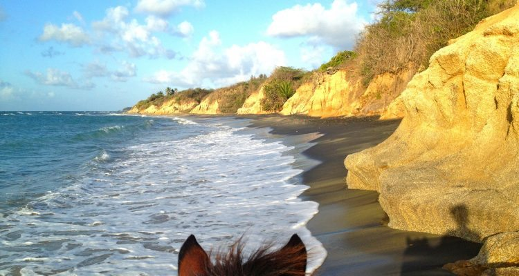 Vieques on Horseback