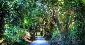 Pilon Road Vieques