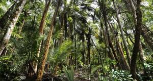 Punta-arenas-jungle-vieques