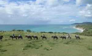 horses-Vieques-