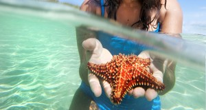 starfish-La-Chiva-Vieques